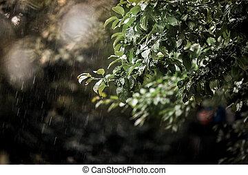 La rama de un árbol bajo la lluvia.