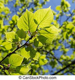 La rama de un árbol en primavera