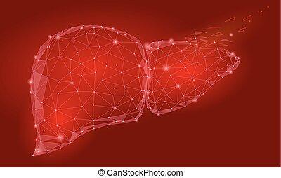 La regeneración del tratamiento deteriora el hígado humano triángulo interno de órganos internos bajos de polietileno. Puntos conectados a color rojo tecnologia 3D modelo medicina saludable cuerpo parte ilustración vectorial