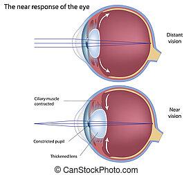 La respuesta cercana al ojo, Eps8