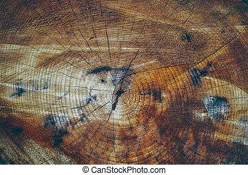 La sección de un árbol