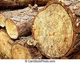 La sección de un pino