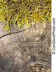La sección de un tronco de árbol