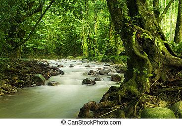 La selva tropical tropical y el río