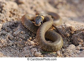 La serpiente espera.