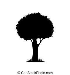 La silueta de un árbol