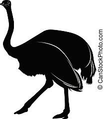 La silueta de un avestruz aislada en el fondo blanco