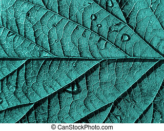 La textura de la hoja de madera