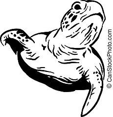 La tortuga del agua