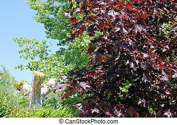 La variedad de árboles en cambio estacional