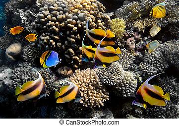 La vida submarina de un arrecife