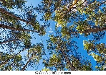 La vista de un pino