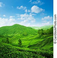La vista del paisaje de la plantación de té