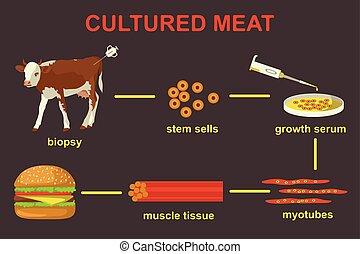 lab-grown, ilustración, carne, vector