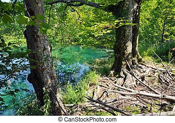 Lago en plitvice, Croacia