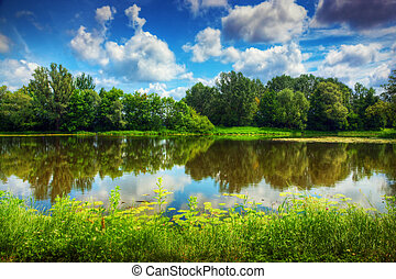Lago en un bosque de verano