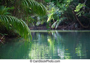 Lago tranquilo con exuberante vegetación tropical