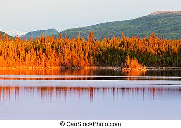 lago, yukon, ocaso, bosque, boreal, reflexiones
