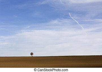 Landscape con árbol