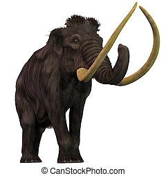 lanoso, blanco, mamut