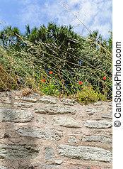 Las amapolas que crecen en una pared de piedra el fondo del cielo
