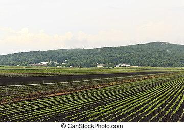 Las cosechas de verano