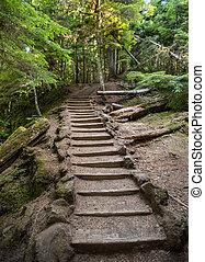 Las escaleras atraviesan el bosque de Oregon