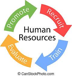 Las flechas de recursos humanos reclutan el ciclo del tren