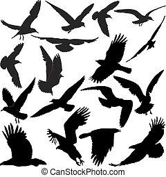Las gaviotas de águila de los Ravens cacarean