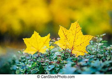 Las hojas amarillas están en los arbustos del parque