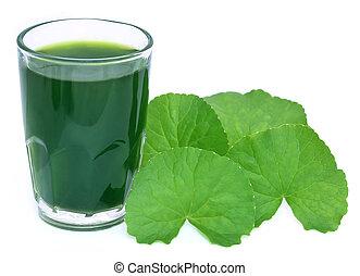 Las hojas de agradecimiento medicinales con extracto