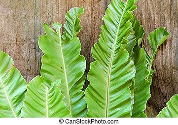 Las hojas de fern