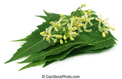 Las hojas de neem medicinales y las flores