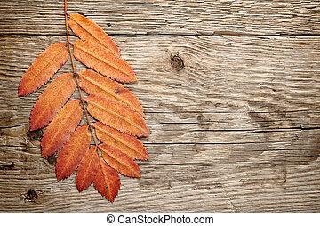 Las hojas de otoño en el fondo de la madera