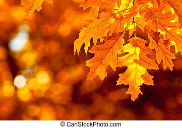 Las hojas de otoño son muy superficiales