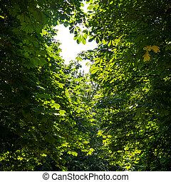 Las hojas de un árbol