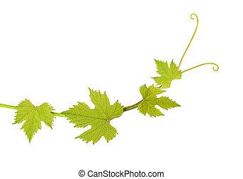 Las hojas de Vine