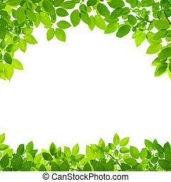 Las hojas verdes bordean los blancos