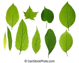 Las hojas verdes están aisladas