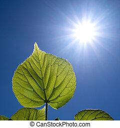 Las hojas y el sol