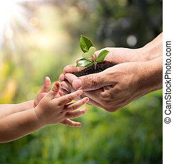Las manos de un niño tomando una planta