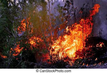 Las olas de calor causan incendios