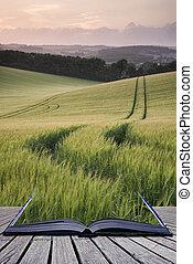 Las páginas creativas del libro Hermoso paisaje de verano de cultivo de trigo durante el atardecer