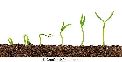 Las plantas que crecen del progreso de la planta del suelo están aisladas