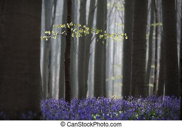 Las primeras hojas del bosque de la primavera