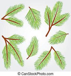 Las ramas de Spruce ilustran