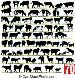 Las siluetas de ganado están listas