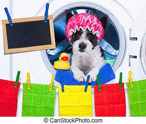 Las tareas domésticas de los perros
