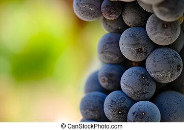 Las uvas rojas se cierran