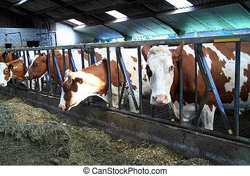Las vacas cultivan animales